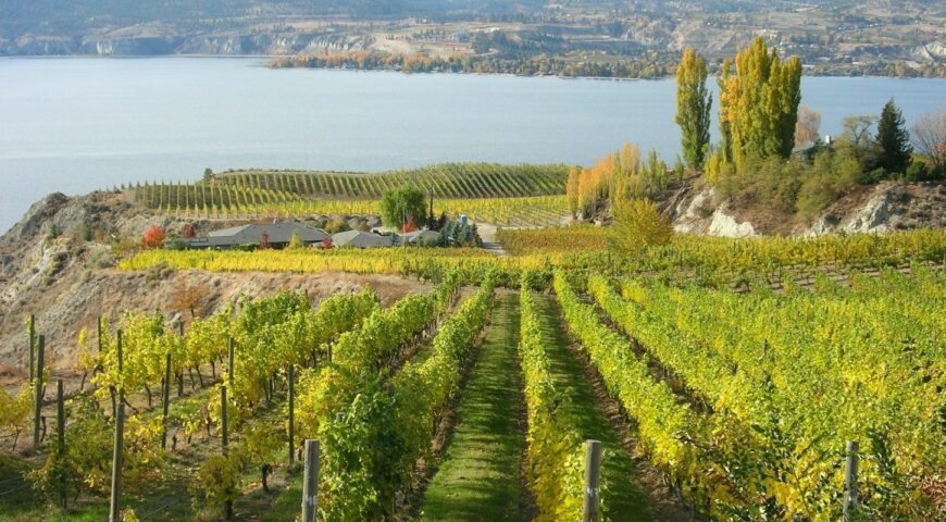Located in the Okanagan Valley, north of Penticton, Naramata Bench grows and produces award winning wine