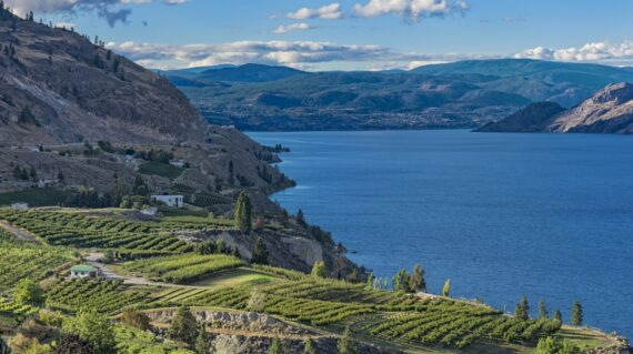 Okanagan Lake near Penticton British Columbia Canada with orchard and vineyard in the foreground